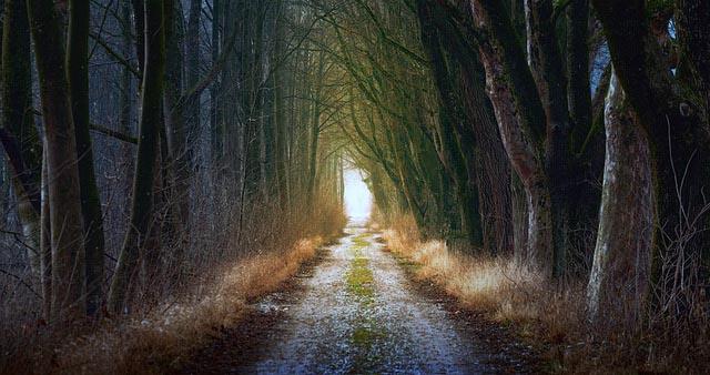 Seelenalter und Weg der Seele