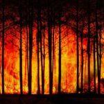 Monatsbotschaft Januar 2020: Warum brennt Australien?