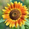 """Kernbotschaften von SOLIA (Teil I): """"Die Sonne im Leben finden"""""""